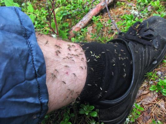 ...16000 видов животных одних только комаров 15500 тысяч видов.